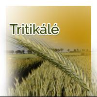 vetomagajanlatok_tritikale