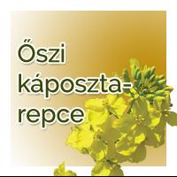 vetomagajanlatok_oszikaposztarepce